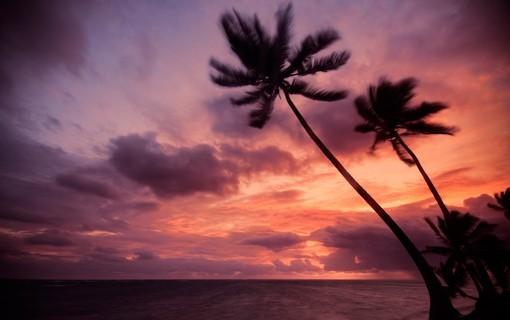 Фотообои Пальмы на фоне вечернего неба (ID 3017)