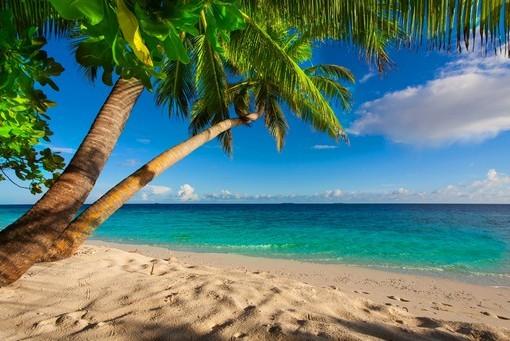 Фотообои Пальма на песчаном пляже (ID 3148)