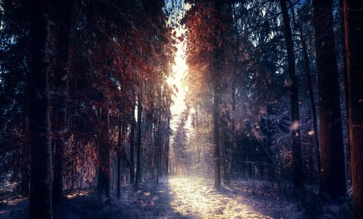 Фотообои Солнце в зимнем лесу (ID 4110)