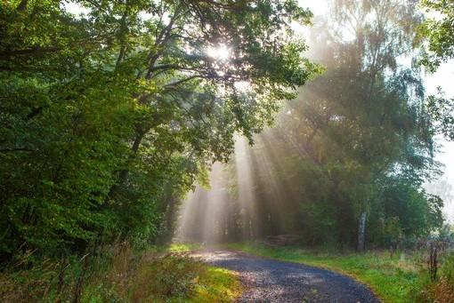 Фотообои Лучи солнца на лесной дороге (ID 4137)