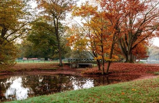 Фотообои Осень в городском парке (ID 4142)