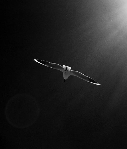 Фотообои Чайка в лучах света (ID 5755)