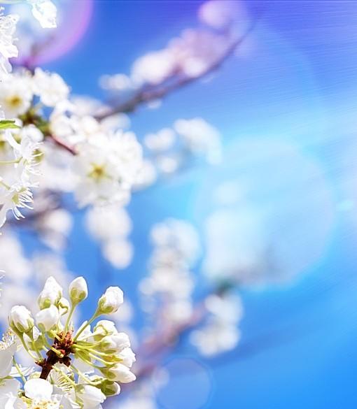 Фотообои Цветущее дерево на фоне неба (ID 6321)