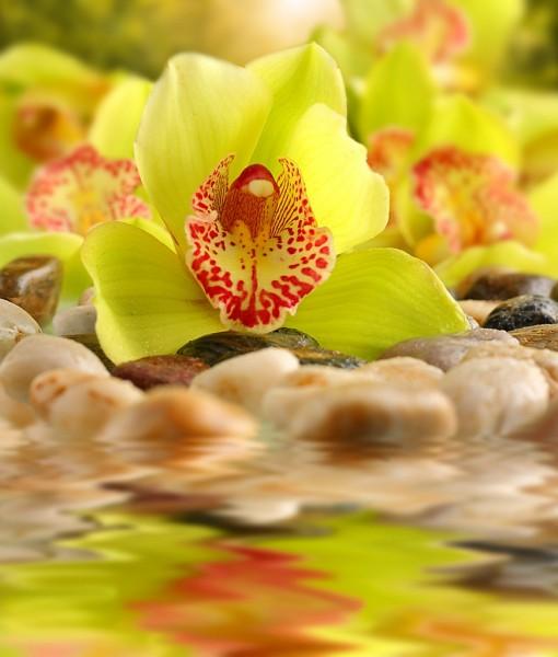 Фотообои Цветок желтой орхидеи (ID 6436)