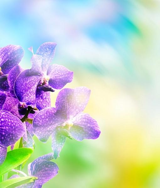Фотообои Коллаж. Орхидея (ID 6439)