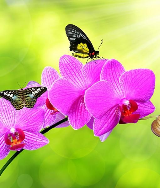 Фотообои Бабочки на цветках орхидеи (ID 6452)