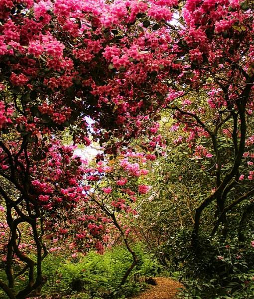 Фотообои Розовое цветение (ID 7833)