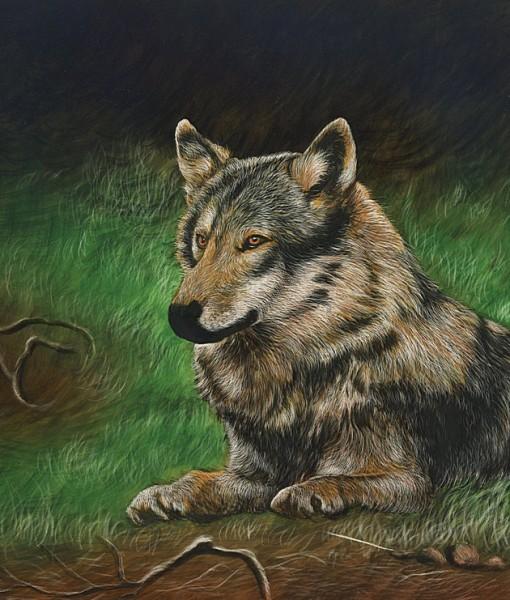 Фотообои Лежащий на траве волк (ID 7995)