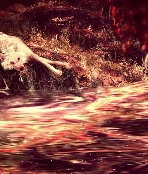 Фотообои Лежащий у реки волк (ID 7996)