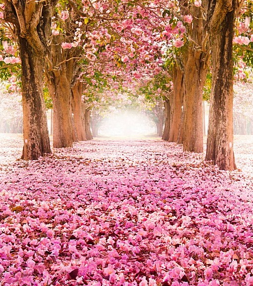 Фотообои Розовая аллея (ID 14640)