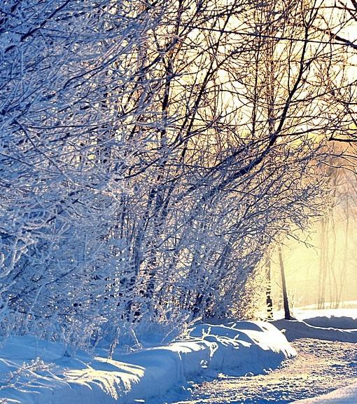 Фотообои Зимняя дорога (ID 14824)