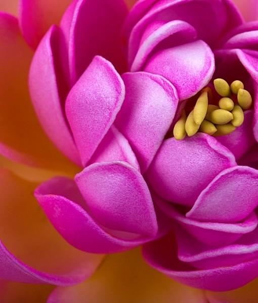 Фотообои Розовый бутон (ID 15061)
