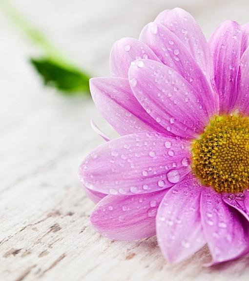 Фотообои Розовый цветок на деревянной поверхности (ID 15108)