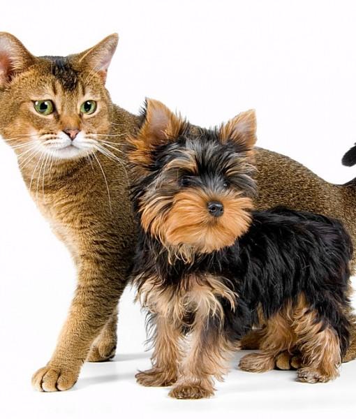 Фотообои Кошка и терьер (ID 8496)
