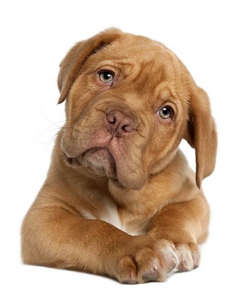 Фотообои Собака на светлом фоне (ID 8507)
