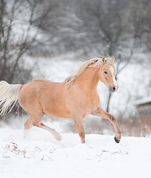 Фотообои Лошадь на снегу (ID 8653)