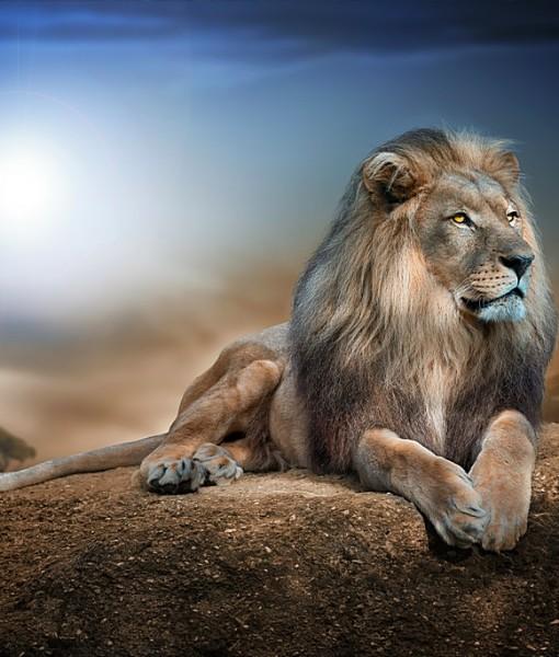 Фотообои Лев на камне (ID 8720)