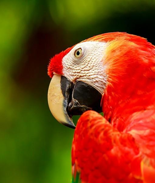 Фотообои Яркий попугай (ID 8766)