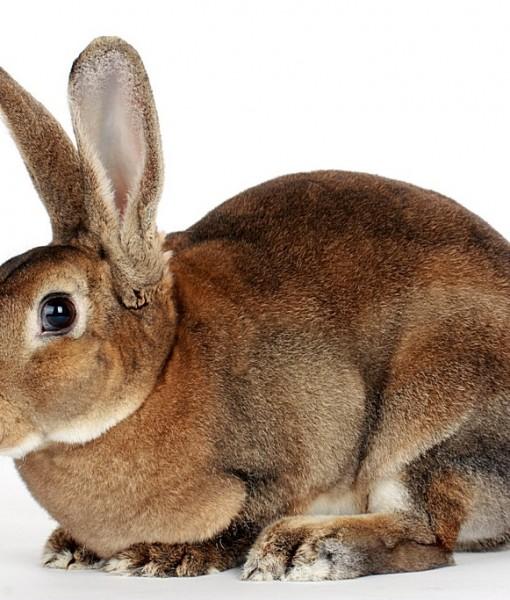 Фотообои Кролик на светлом фоне (ID 8775)