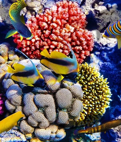 Фотообои Подводный мир (ID 8942)