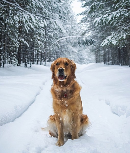 Фотообои Собака на зимней дороге (ID 9065)