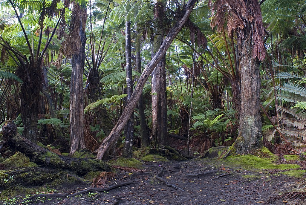 Hawaiian Tropical Rainforest