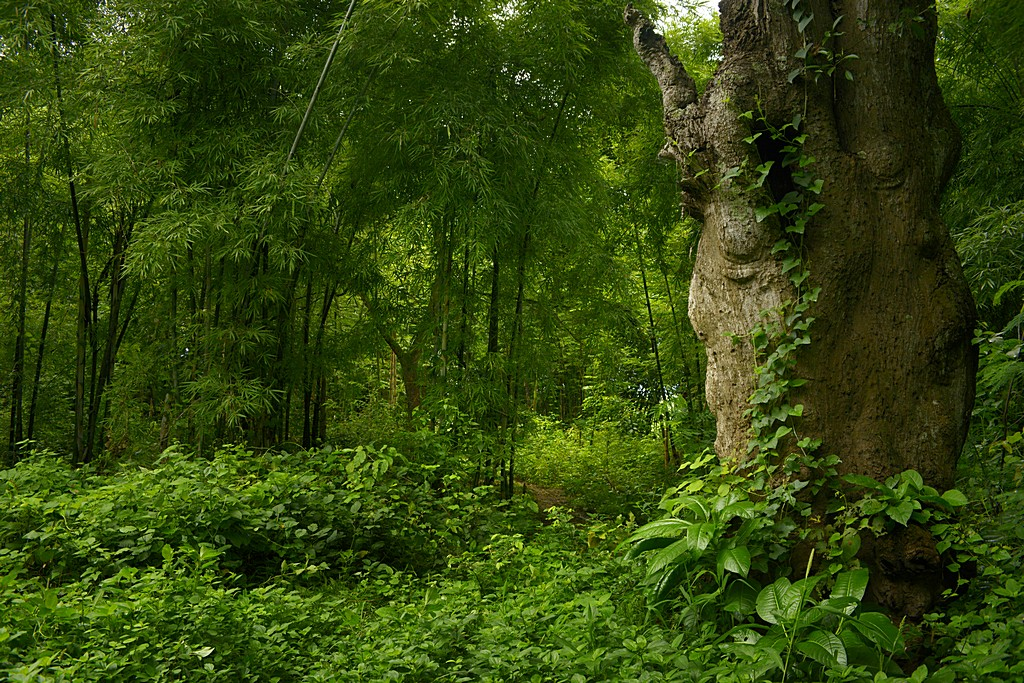 Selva asitica