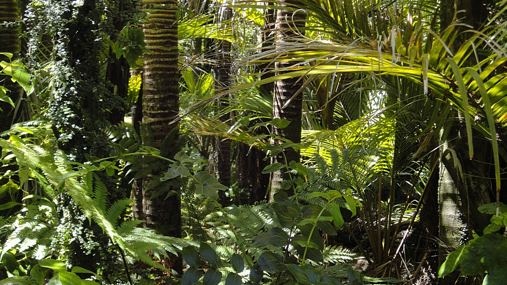 Rainforest with palm tree image in Nature and Landscapes category at pixy.org
