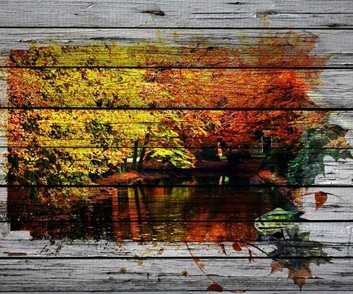 Осенний лес (ID 19067)